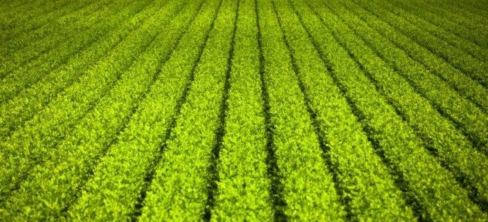 Food& Agrochemical